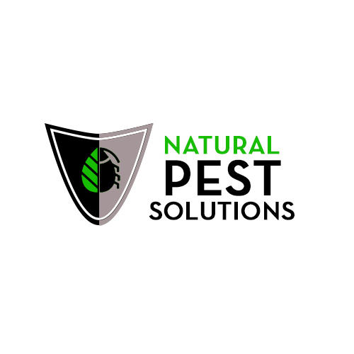 Pest Control For Insects Is Necessary Since They Can Invade A Home And Keep In It Unnoticed For M ...